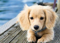 Best Dog Products For Golden Dox