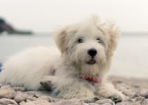 Best Dog Products For Highland Maltie