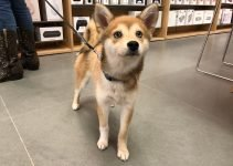 Best Dog Products For Imo Inu
