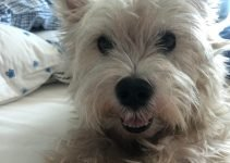 Best Dog Products For King Cavrin