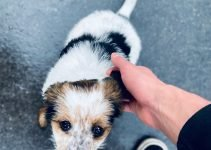 5 Best Dog Products For Malteagle (Reviews Updated 2021)