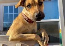 Best Dog Products For Mastador