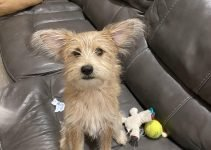 5 Best Dog Products For Mini Cairn Pin (Reviews Updated 2021)