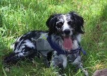 5 Best Dog Products For Munsterlander (Reviews Updated 2021)