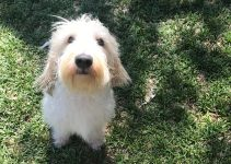 5 Best Dog Products for Grand Basset Griffon Vendeens (Reviews Updated 2021)