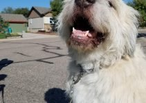 Best Dog Products For Great Wolfhounds