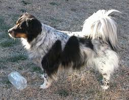 Bodacion Dog Breed Information All You Need To Know