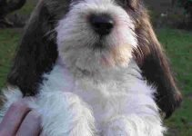5 Best Dog Products For Petit Basset Griffon Vendeen (Reviews Updated 2021)