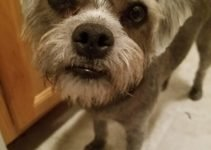 5 Best Dog Products For Pugapoo (Reviews Updated 2021)