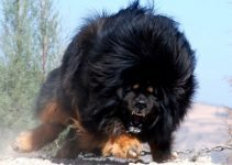 5 Best Dog Products For Russian Bear (Reviews Updated 2021)