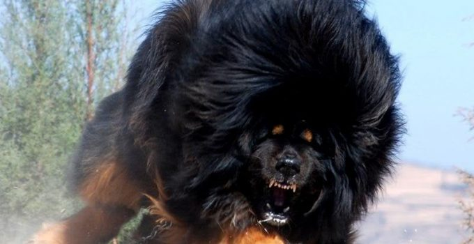 Best Dog Products For Russian Bear
