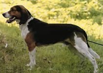 5 Best Dog Products For Russian Harlequin Hounds (Reviews Updated 2021)