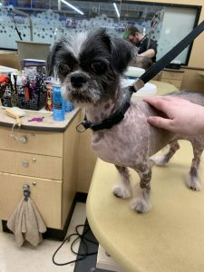 Crested Tzu Dog Breed Information All You Need To Know