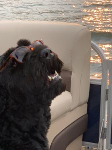 10 Dog Breeds Most Compatible With Black Russian Terriers
