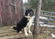 5 Best Dog Products For Karakachan (Reviews Updated 2021)