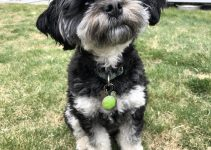 5 Best Dog Products For Schapso (Reviews Updated 2021)