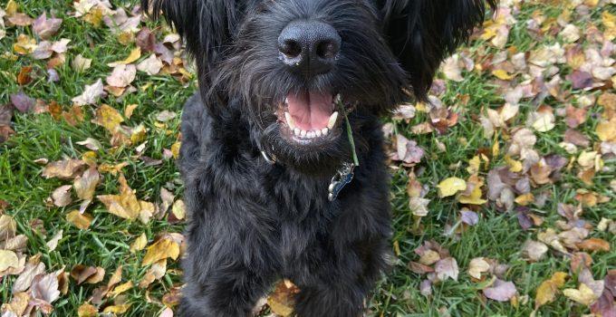 Best Dog Products For Schnauffen