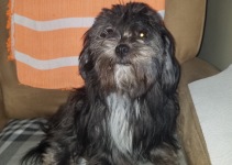 5 Best Dog Products For Shih Apso (Reviews Updated 2021)