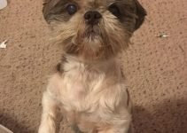5 Best Dog Products For Shih-Mo (Reviews Updated 2021)