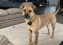 5 Best Dog Products For Siberian Black Mouth Cur (Reviews Updated 2021)