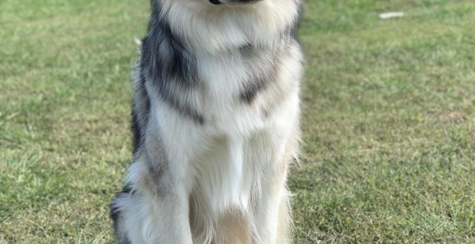 Best Dog Products For Siberian Indian Dogs