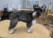 5 Best Dog Products For Standard Schnauzer Chin (Reviews Updated 2021)