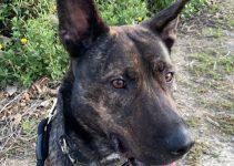 Best Dog Products For Shepherd Pits
