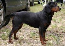 5 Best Dog Products for Slovensky Kopovs (Reviews Updated 2021)