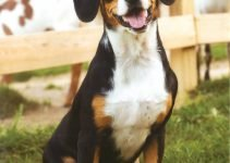 5 Best Dog Products for Small Swiss Hounds (Reviews Updated 2021)