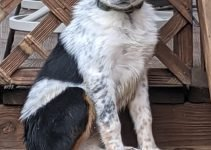5 Best Dog Products for Texas Heelers (Reviews Updated 2021)