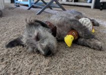 5 Best Dog Products for Tibetan Wolfhounds (Reviews Updated 2021)