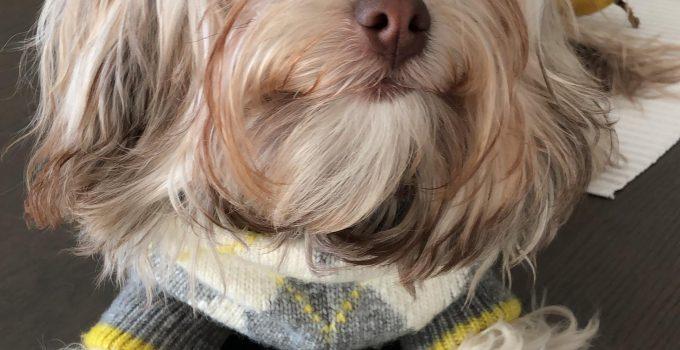 Best Dog Products For Tsvetnaya Blonka Poos