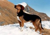 5 Best Dog Products for Tyrolean Hounds (Reviews Updated 2021)