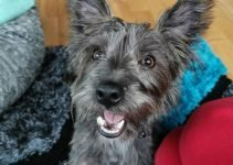 Fourche Terrier Dog Breed Information – All You Need To Know