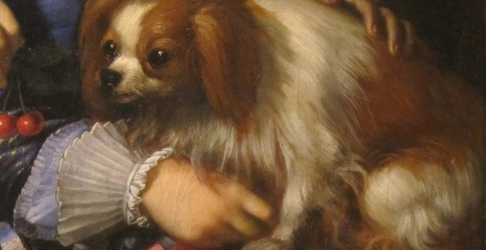 French Buillon Dog Breed Information All You Need To Know