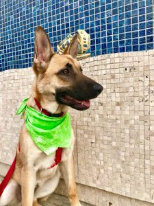 German Malinois Dog Breed Information All You Need To Know