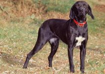 10 Dog Breeds Most Compatible with Plott Hounds