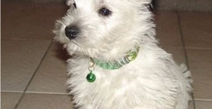 Best Dog Products For Westekes
