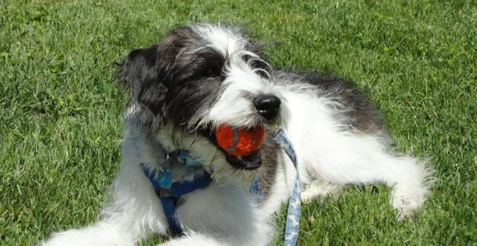 Best Dog Products For Wire Poos