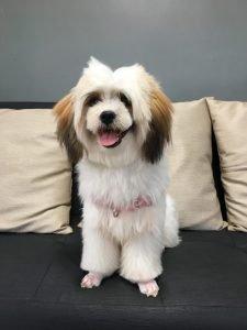 Jatzu Dog Breed Information All You Need To Know