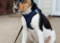 10 Dog Breeds Most Compatible with Rat Terriers