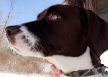 Labany Dog Breed Information – All You Need To Know