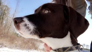 Labany Dog Breed Information All You Need To Know