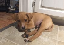 Mountain View Cur Dog Breed Information – All You Need To Know