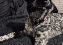 Pointollie Dog Breed Information – All You Need To Know